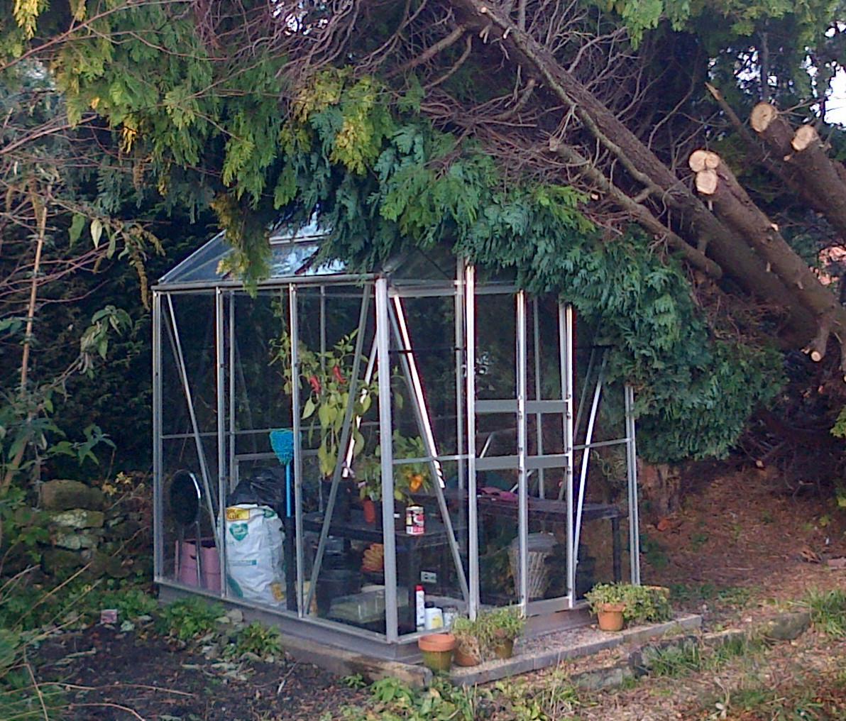 V1_Tree_Damage228-01-2019-10-17-04.jpg