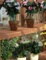 """Cedar shelf 12"""" x 5ft6 (1670mm)"""
