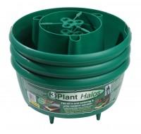 Plant Halos Green set of 6