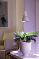 L15 Plant Light