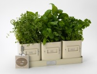 Jersey Cream Enamel Herb-Pots-in-a-Tray